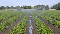 irrigation reduced size 33248415_l